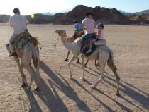 safari excursions five in one from sharm el sheikh quad biking camel riding bedouin show and dinner and star gazing