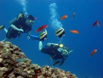 scuba diving excursion from sharm el sheikh