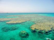 tiran island snorkeling excursion by boat from sharm el sheikh